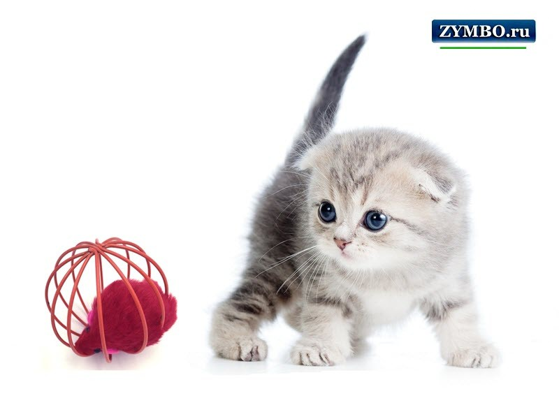 """Игрушка для кошек """"Мячик"""""""