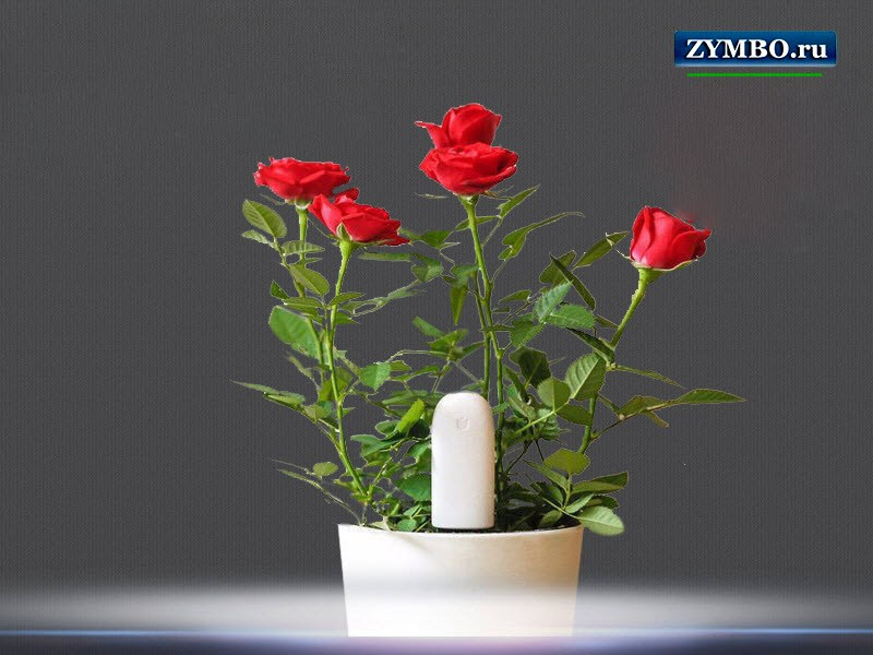 Датчик для растений Xiaomi Mi flower monitor