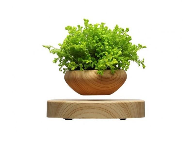 Левитирующие растения (левитирующий горшок)