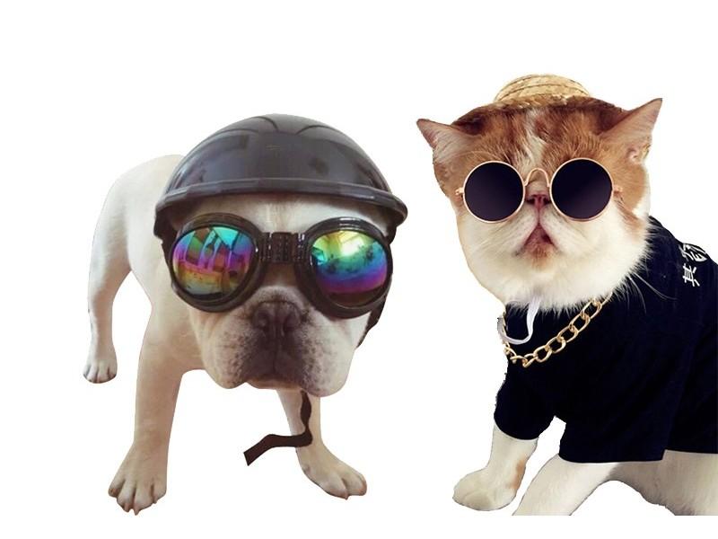 Очки для собак и котов
